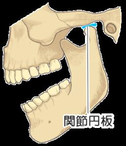 顎関節の関節円盤の存在