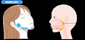 耳下腺・顎下腺・舌下腺の場所